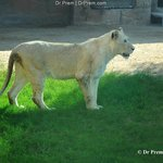 Al Ain Wildlife Park & Resort