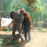 Mr.Yun Ran-tong's mahout training.