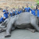 Elephant enjoying a mud bath
