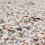 Piles of shells!