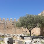  An olive tree within the ramparts
