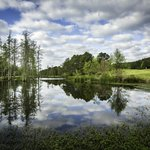 Cypress Bend Golf Resort Many