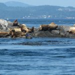 local seals, otters, whales, eagles & much more