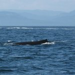 whale watching, sailing & view of MT. Baker