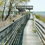 Marsh Trail - the boardwalk