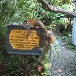 The monkeys loved to visit!