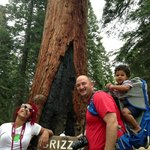 Mariposa Grove: Giant Sequoia Trees