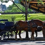 Horse and buggy across the street