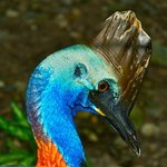 Daintree Wonder Tours