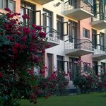 Hotel Pine Grove Lawns in Full Rose bloom