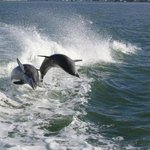Dolphins In Naples Florida
