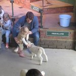 Feeding the lambs at The Big Sheep
