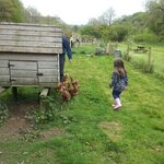 our daughter looking for eggs