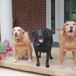 3 Fat Labs