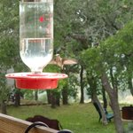 Pretty Humming Bird Feed on Porch