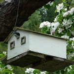 Ainswoth Motel for birds...