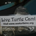 See the turtles all the time!