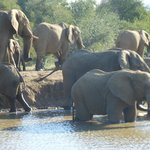 Elephants at the water hole right on our doorstep!