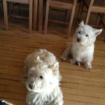 Westies at Colquhonnie House