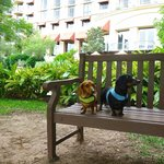 Dogs are welcome; shown resting on hotel bench