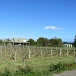 Bilde fra Martinborough TOP 10 Holiday Park