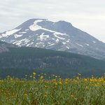 South Sister with wildflowers from the Sparks Lake island in front
