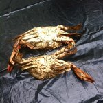 The top crab was a medium, we had one of those and the rest were small wet crabs !