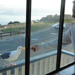 feeding seagulls from the room