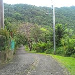 Road leading to Ceiba Country Inn