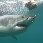 Shark Experience -Day Tours
