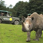 Meet the only black rhinos in Scandinavia on a game drive