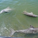 Photo de Dolphin Research Center