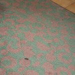 soiled carpet