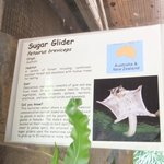 Sunway Lagoon Wildlife Park in Feb 2013 - Sugar Glider