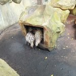 Sunway Lagoon Wildlife Park in Feb 2013 - OMG! people! hide!