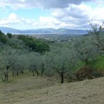 View while hiking through the olive grove