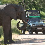 KNP game drive