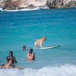 a great day body boarding an a little more for mans best friend