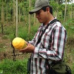 William, our guide, peeling a papaya for us that he just picked