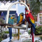 Parrots in Courtyard
