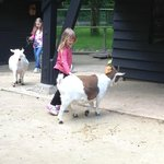 childrens farm - lovely!