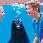 Share a laugh with sea lions at SeaWorld
