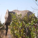 one of the 3 elephants we saw on our way out