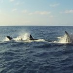 The Ocean Safari yesterday with Tofo Scuba. Orca's. Wow!!