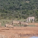 Animals around the water hole