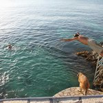 a dive from the cliffs with dog Rosa about to follow us