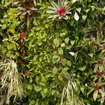 Our vertical garden is a plant filled living wall.