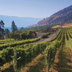 West Kelowna Vineyard