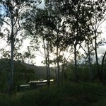 Evening at cabin, dwarfed by magnificent gums in the grounds