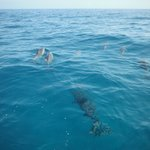 One of the groups of dolphins we saw